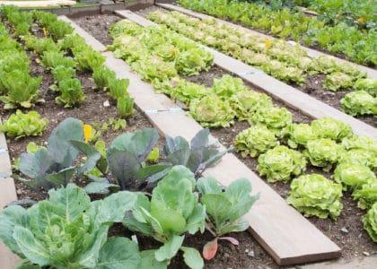 Urban Farming Farmers Market