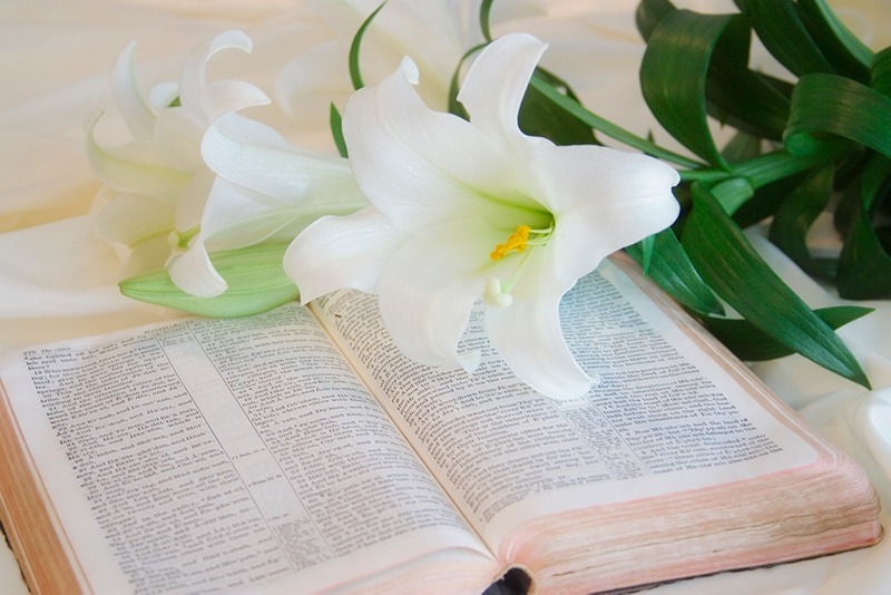 Easter Lilies and Bible